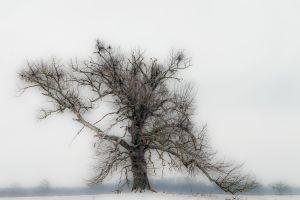 Dányi Magdolna: Ősi fa