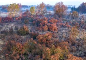 Daróczi Csaba: Egy tenyérnyi dzsungel
