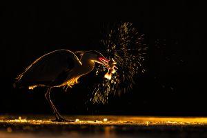 Bedő Kornél: Tűzijáték