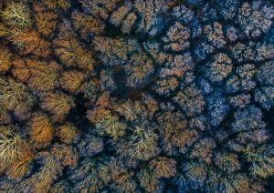 Dr. Simán László: Dérlepte erdő napkeltekor