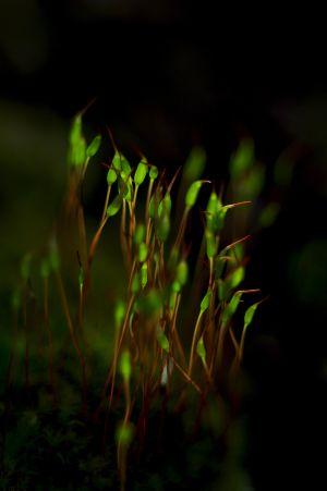 Mádi József: Zöld lámpások