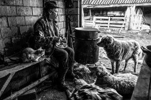Nagy Gábor: A juhász ebédje