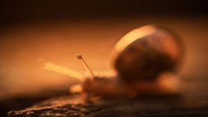 Ravasz Balázs: Egy szem a naplementében