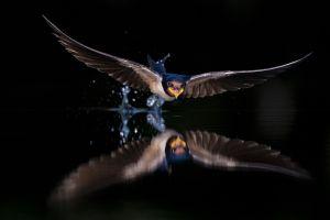 Máté Bence: Tükörkép