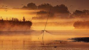 Petőcz Tamás: Lehalászás után